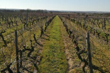 vigne fevrier 2021